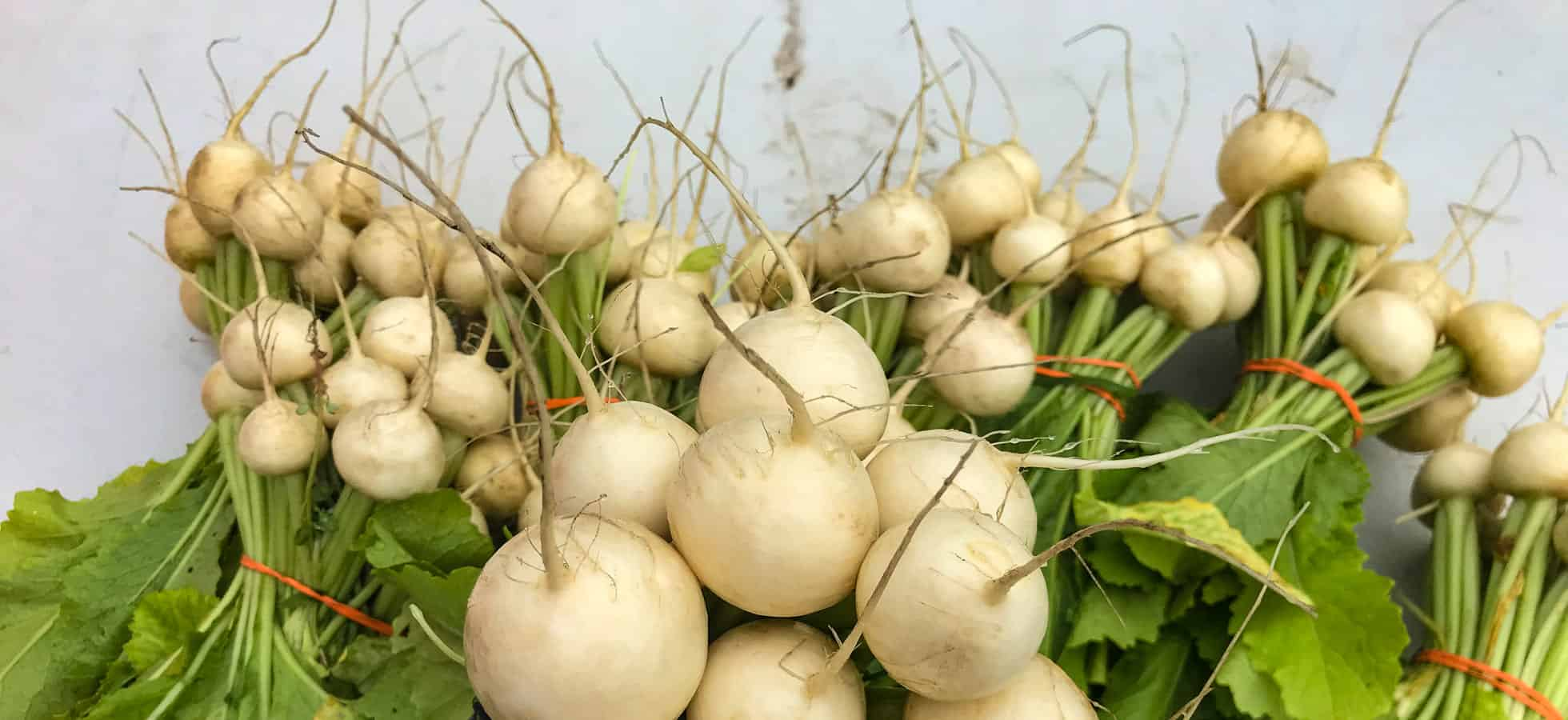 Turnips - Second Season Farm